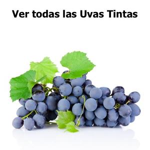 Ver todas las plantas de uva TINTAS